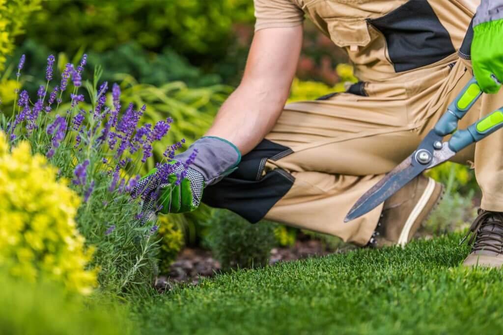 caucasian-gardener-and-the-garden-maintenance-job-EKN65NC
