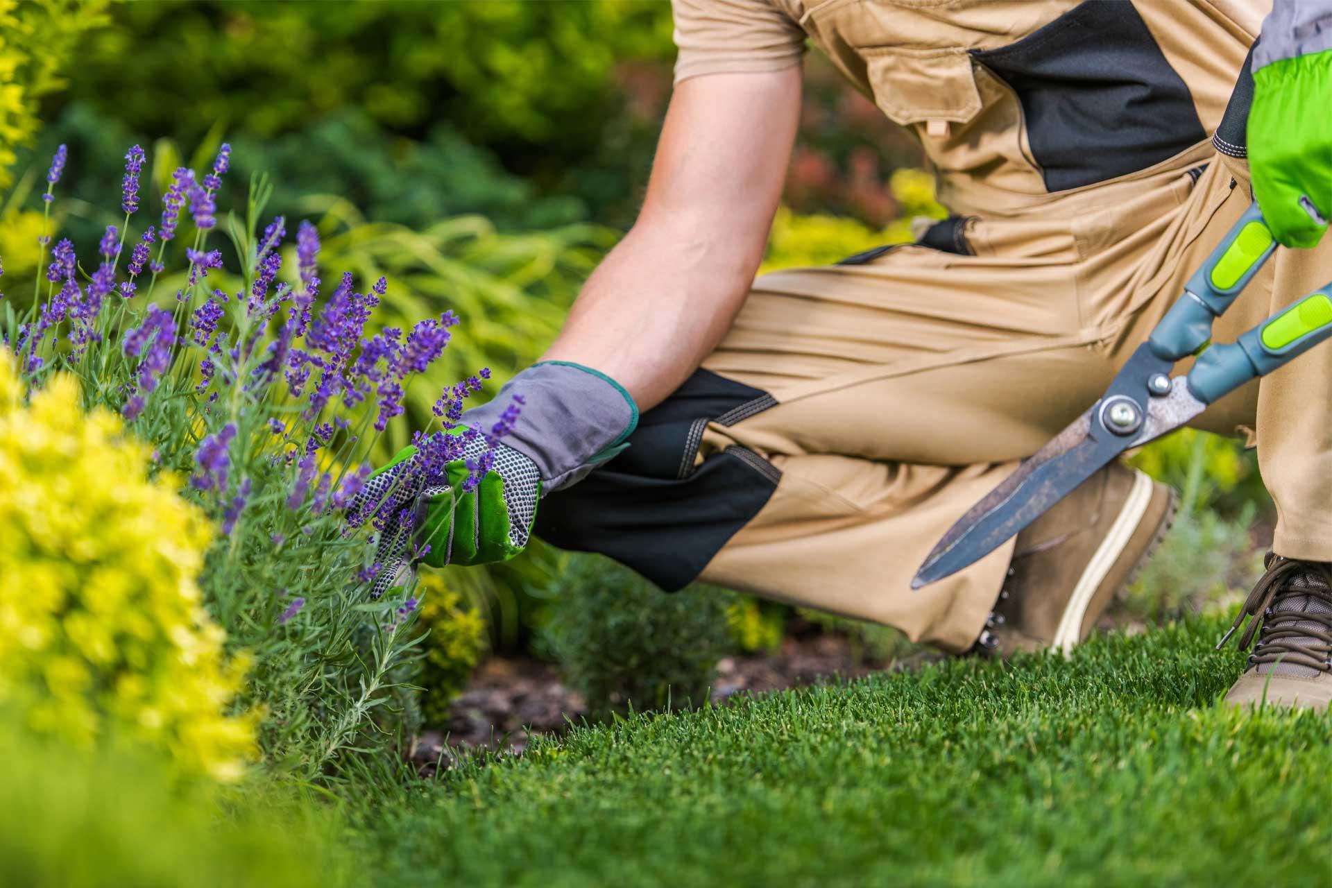 Caucasian Gardener And The Garden Maintenance Job