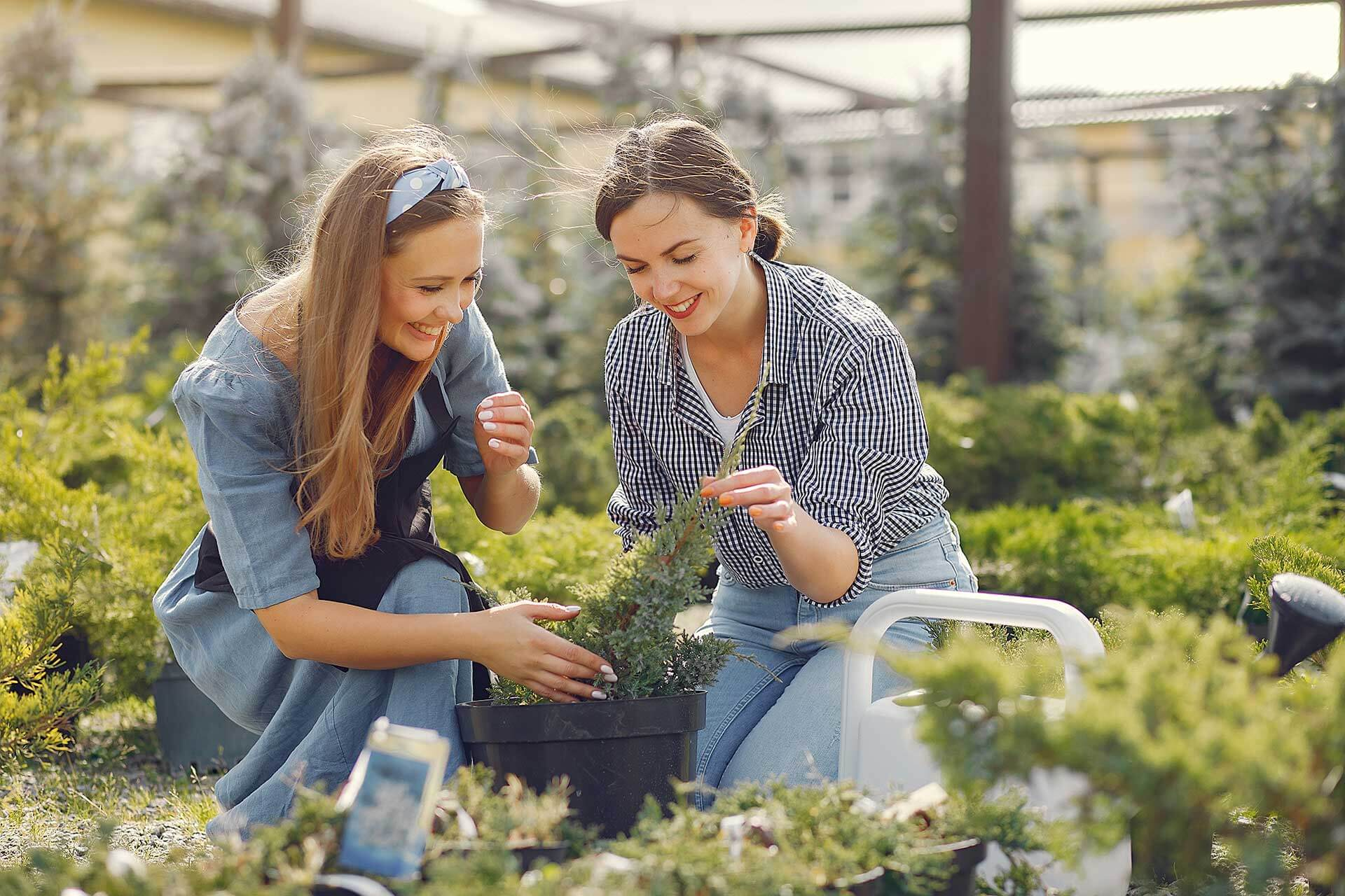 Women Working In A Greenhouse With A Flower Pots